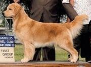 Underdog dog, CH. Toasty's Treasure Island