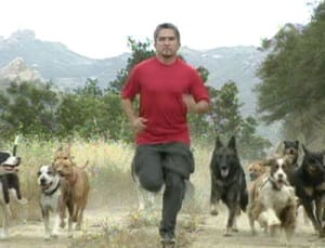 Pet expert Steve Dale writes about Cesar Millan and Simon the pig