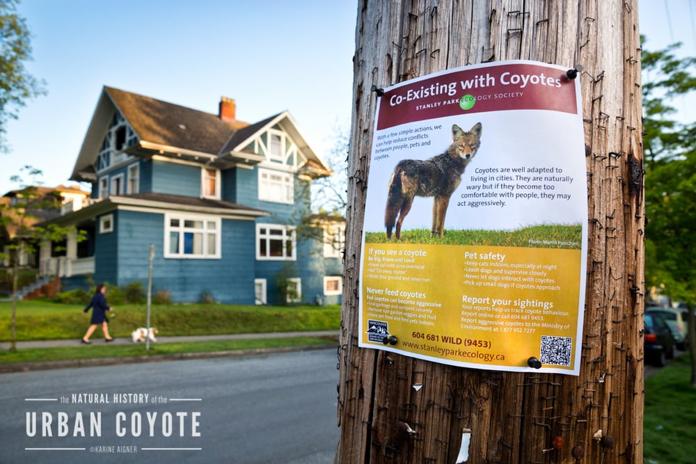pet expert Steve Dale writes about keeping pets safe from coyotes