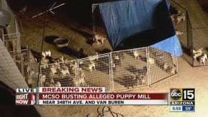 Puppy mills exists where you may not expect