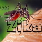 Zika virus doesn't appear to affect dogs, but it sure can affect people, among many other diseases spread by mosquitoes