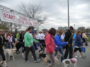 Pet expert Steve Dale will adopt a dog on WGN
