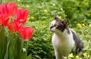 Trap neuter return works says cat expert Steve Dale