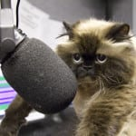 Perhaps this cat can debate on the radio