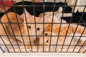Pet expert Steve Dale writes an piece on TNR opposing the John Kass story