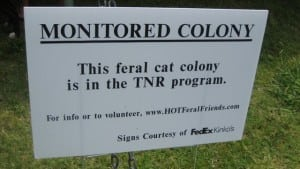 Nearly all feral cats live with others in colonies