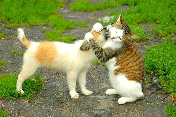 Pet expert Steve Dale says pet don't always enjoy being hugged