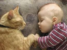 Pet expert Steve Dale writes about babies and pets