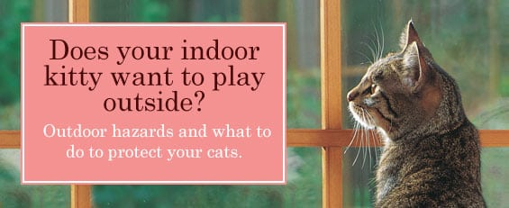 Living indoors only IS safer, and therefore cats indoors only do live longer, overall