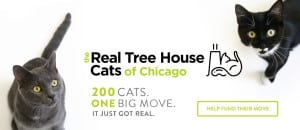 Cat expert Steve Dale and Paul Nickerson talk about TNR on WGN Radio