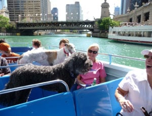 On Chicago Canine Cruise