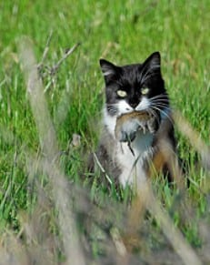 Cat expert Steve Dale writes about finicky cats, and overweight cats