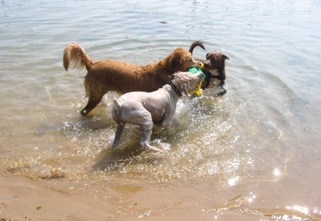 Pet expert Steve Dale appears at Mondog Dog Beach for Friends of Chicago Animal Care and Control