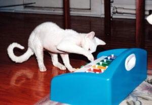 Steve Dale's cat Ricky
