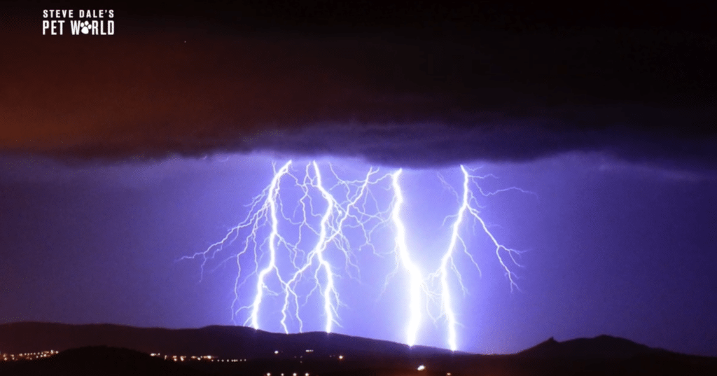 Dr. Amy Pike and Steve Dale talk thunderstorm anxiety