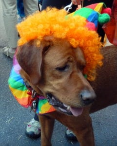 Pet expert Steve Dale on Halloween tips for pets and pet owners