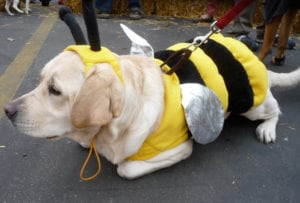 Pet expert Steve Dale writes about Halloween pet safety