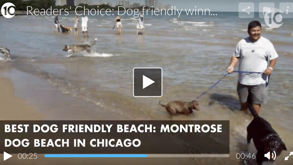 Montrose Dog Beach named the best in the USA, a poll in USA