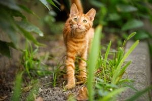 Pet expert Steve Dale writes about National Feral Cat Day, and TNR