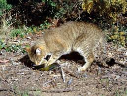 Pet expert Steve Dale writes about feral cats, National Feral Cat Day