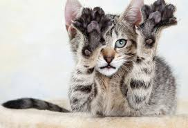 Pet expert Steve Dale comments on the New Jersey and New York proposed bans on declaw in cats