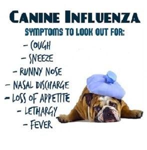 dog-flu-symptoms