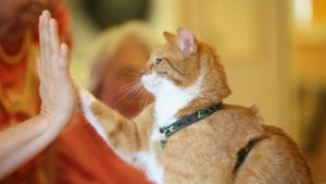 Cat expert Steve Dale writes about the declaw ban in New Jersey and New Yor