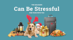Pet expert Steve Dale offers tips on air travel for pets over holidays