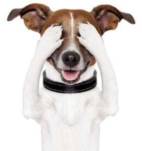 Pet expert Steve Dale with Dr. Debra Horwitz and Dr. John Ciribassi on Decoding Your Dog