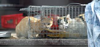 Pet expert Steve Dale and Anne Beall testify regarding TNR or TNVR