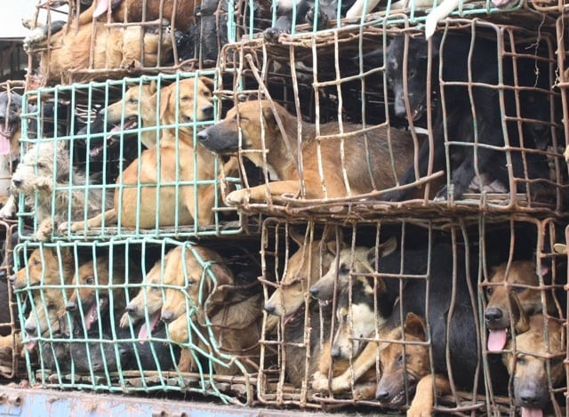 Pet expert Steve Dale on Illinois becoming more inhumane