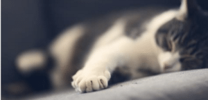 Pet expert Steve Dale investigates to declaw or not to declaw