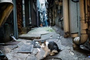 Cat expert Steve Dale comments on TNRV