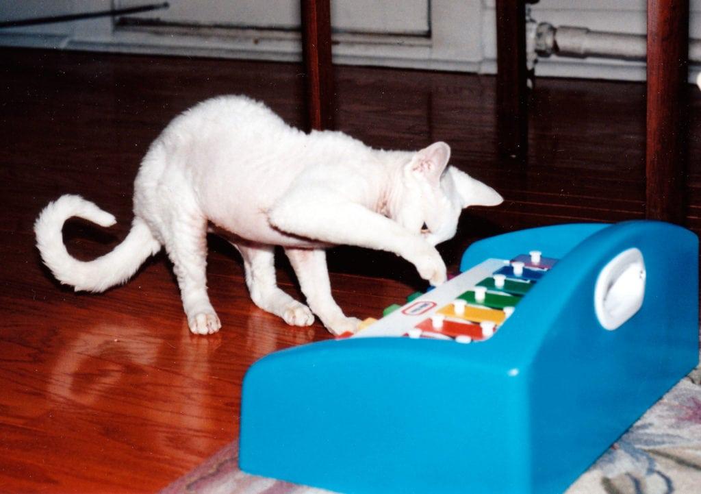 Cat expert Steve Dale on Winn Feline Foundation Ricky Fund
