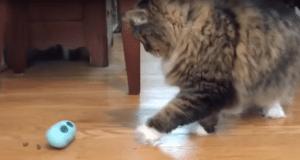 Pet expert Steve Dale on NoBowl Feeding System