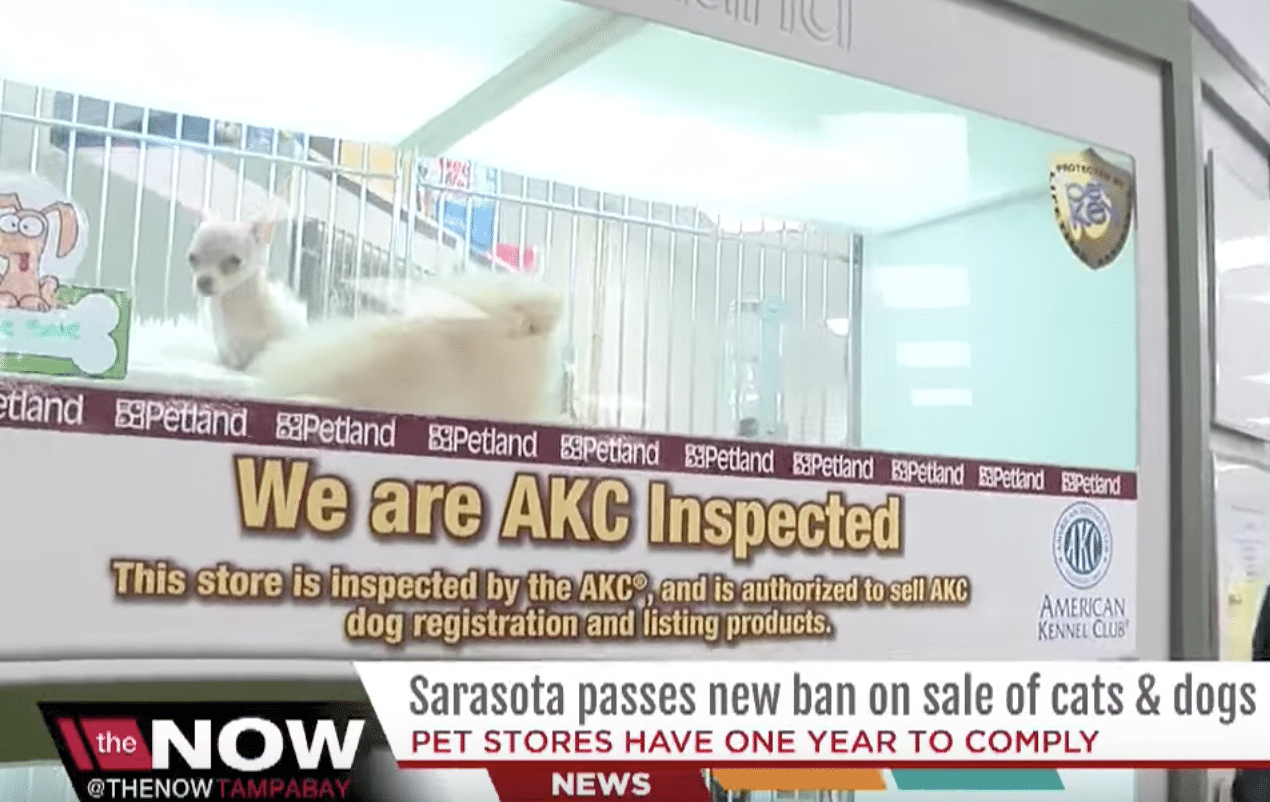 American Kennel Club opposes laws limiting pet stores sales