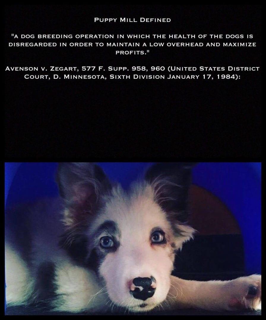 Guest blogger Peggy Grandahl on Joliet banning pet store