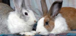 Pet Expert Steve Dale says rabbits should not be impulse