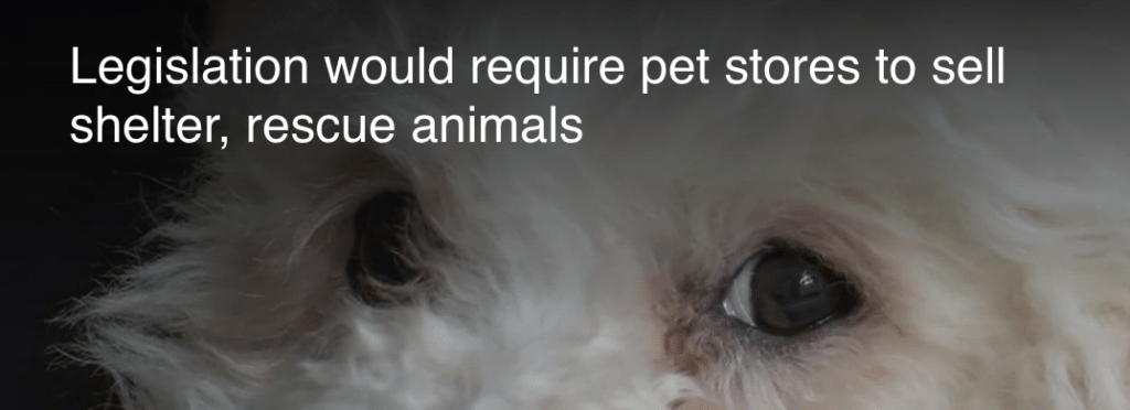 Pennsylvania bill to ban dogs, cats, and rabbits sold at pet
