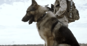 Pet expert Steve Dale on the film Megan Leavey and hero dog Rex