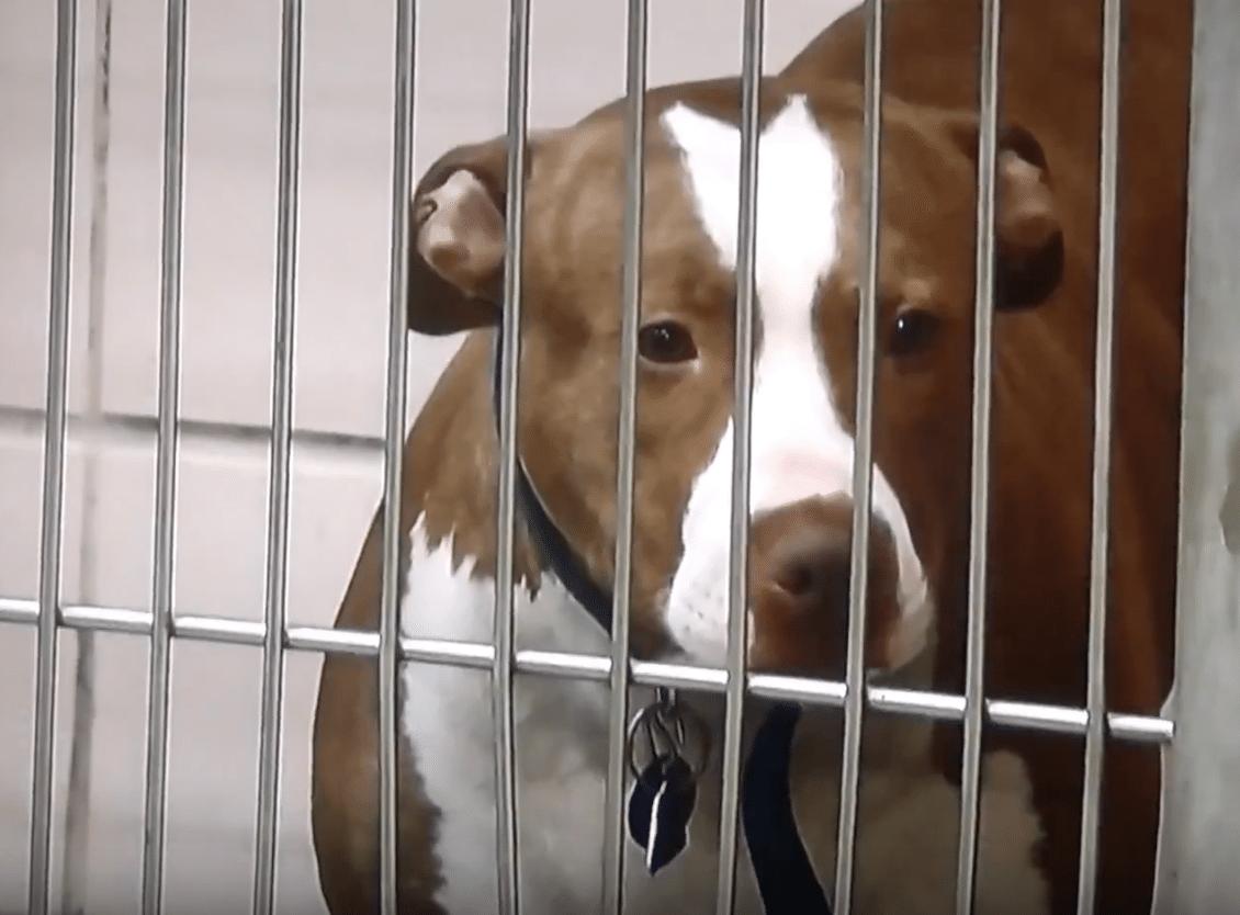 Animal Welfare League of Chicago responds to community pressure