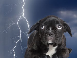 What to do about thunderstorm anxiety in dogs