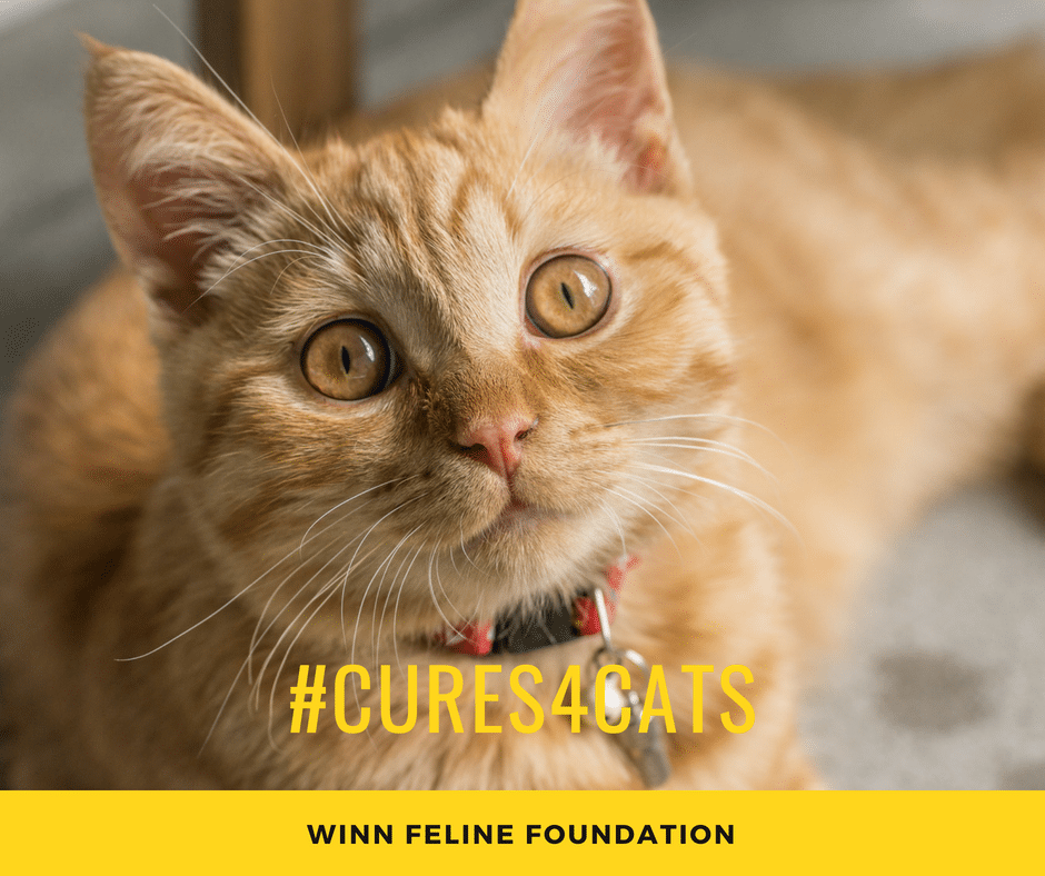 pet expert Steve Dale on Cures4Cats Day