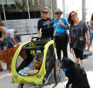 Puppy Mill Project walk for National Puppy Mill Awareness Day