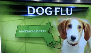 Boston has been one of several cities continue to be affected by dog flu