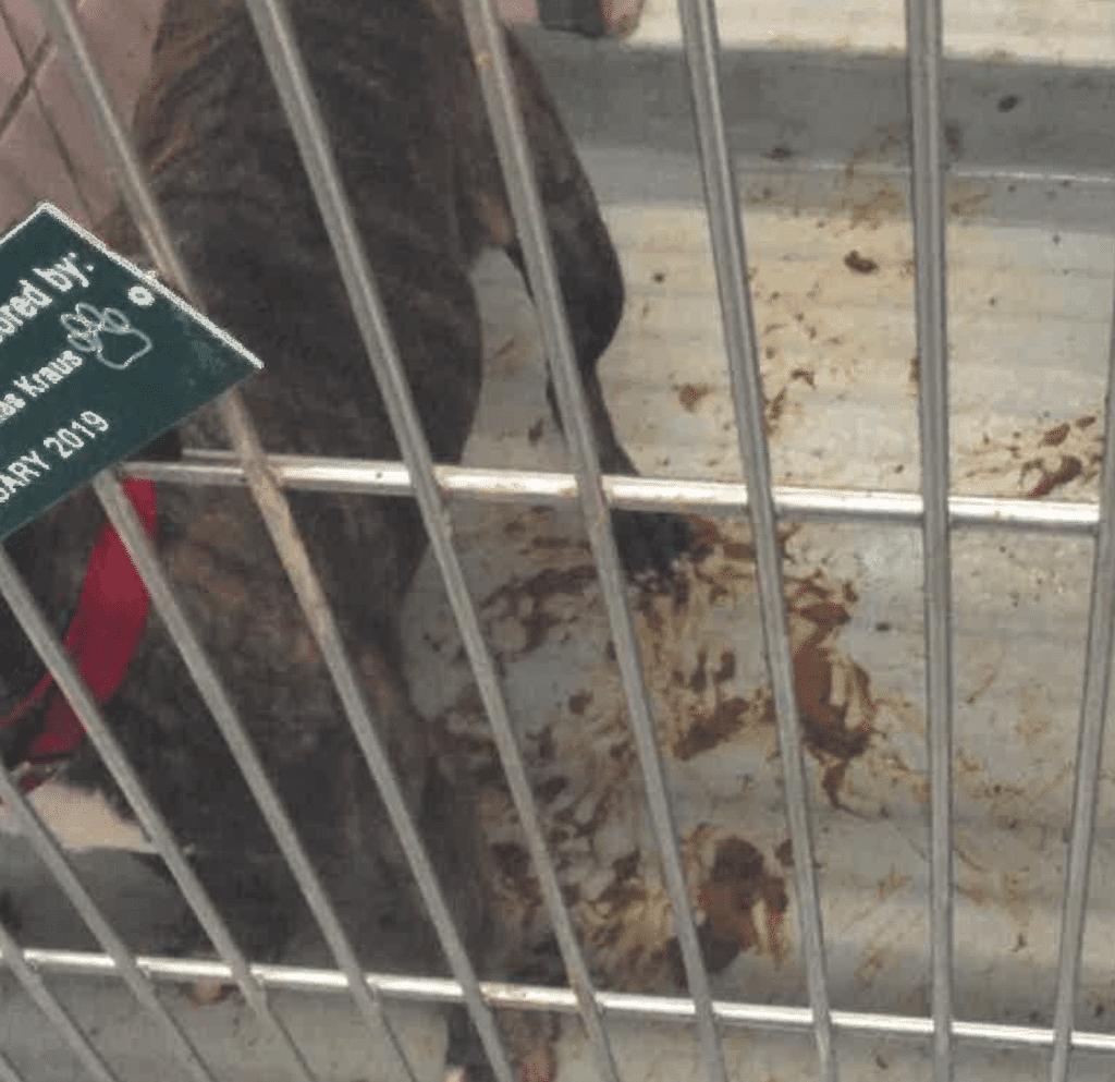 Animal Welfare League report