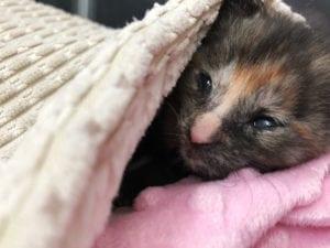 Pet expert Steve Dale on Windy Kitty Cat Cafe seeks funds for kitten nursery