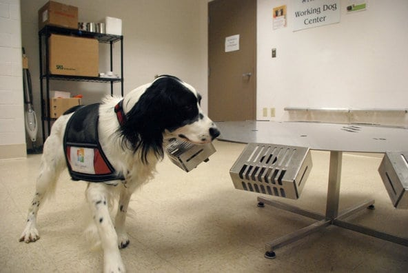 Dogs detecting ovarian cancer, Ovarian Cancer Symptom Awareness