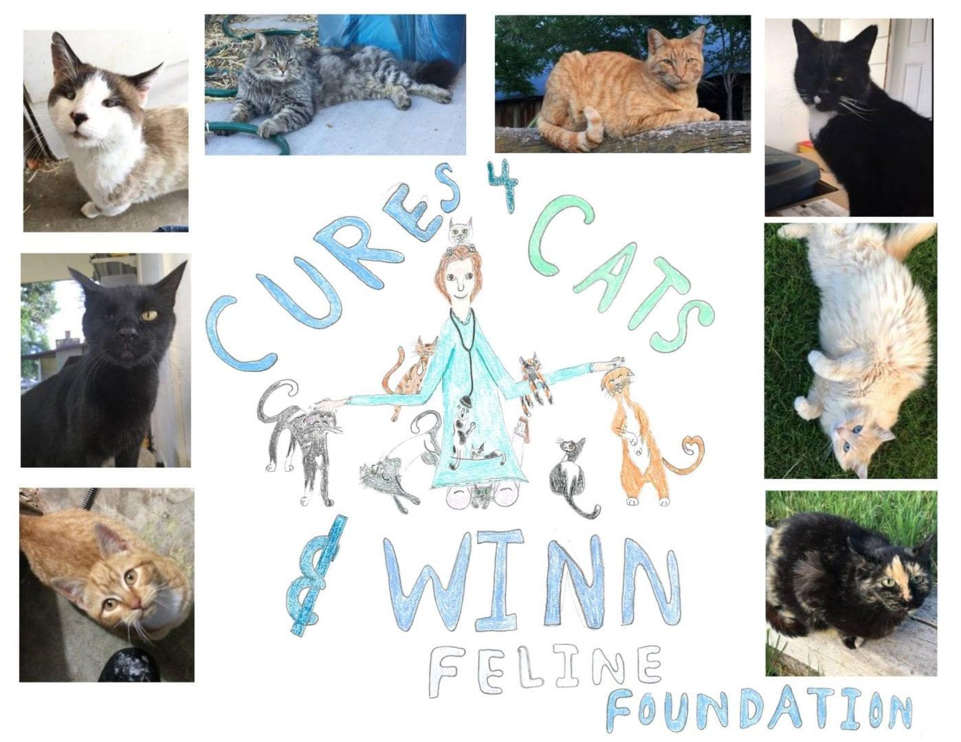 Cures4Cats Day Winn Feline Foundation
