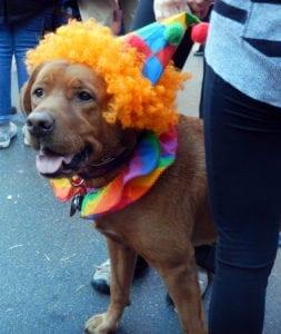 Pet expert Steve Dale on pet Halloween safety tips